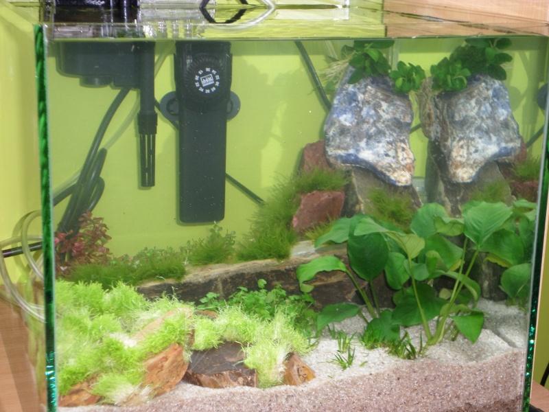 aquarium nano pour crevette Sam_2613