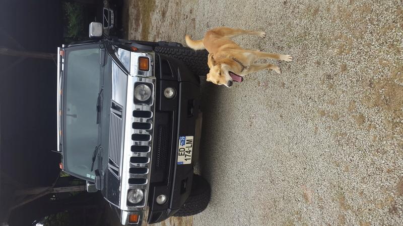 Photos de votre Hummer & animal de compagnie - Page 2 20160712