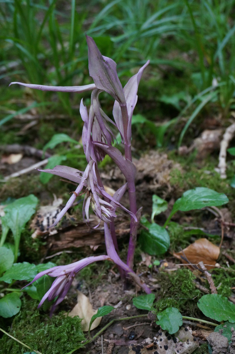 Avis de recherche : orchidées albinos - Page 3 Dsc00710