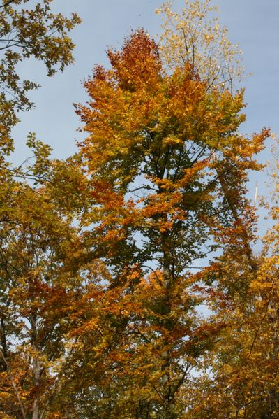 Concours photos automne !!! - Page 3 Charme10