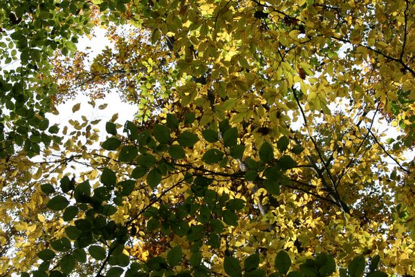 Concours photos automne !!! - Page 3 Feuill10