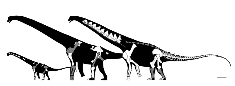Dinosaur Size Charts Alamos10