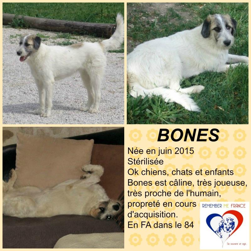BONES, chiot femelle, née en juin 2015 (Pascani) - adoptée par Marybee (dpt84) - Page 2 Bones10