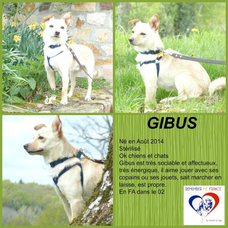 GIBUS,mâle croisé né environ août 2014 , taille petite (Pascani) - adopté par Gérard (dpt89) - Page 6 Gibus10