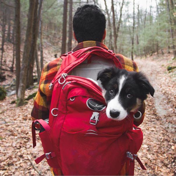 Camping..... paradis des chiens Chien-11
