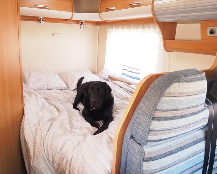 Camping..... paradis des chiens Chiena10