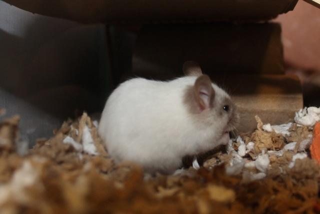 My new boy!! Img_9722