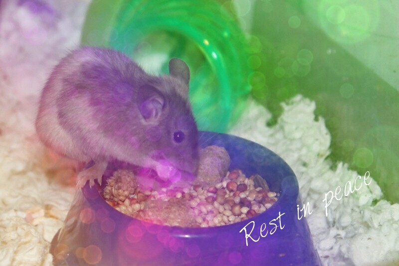 Rest In peace, Violet Mouse211