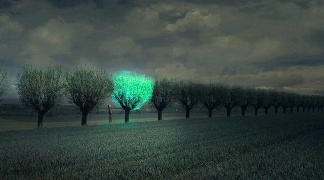 Un phare dans la nuit Biolum10