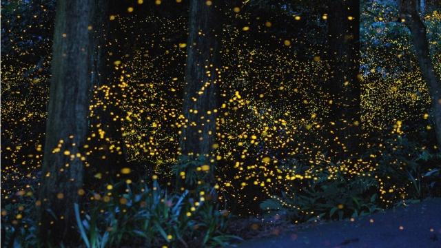 Un phare dans la nuit Tsunea10