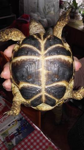 Terra Tortues Steppes Lya_111