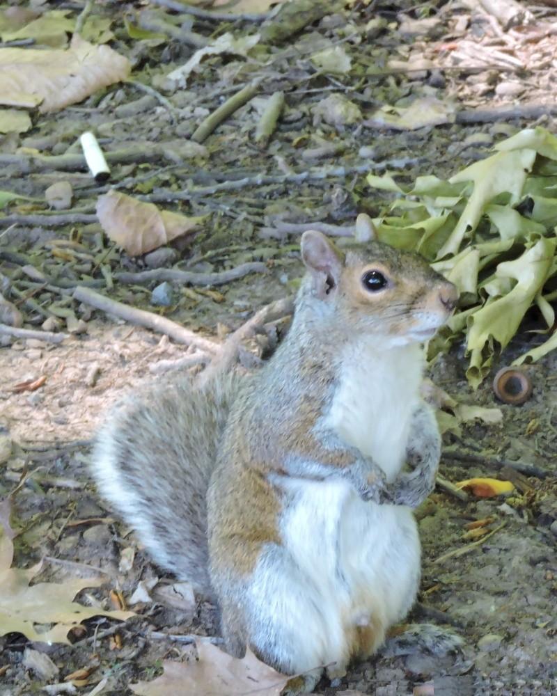 C'est pas parce que c'est un écureuil qu'on doit lui lancer un mégot Dscn0810