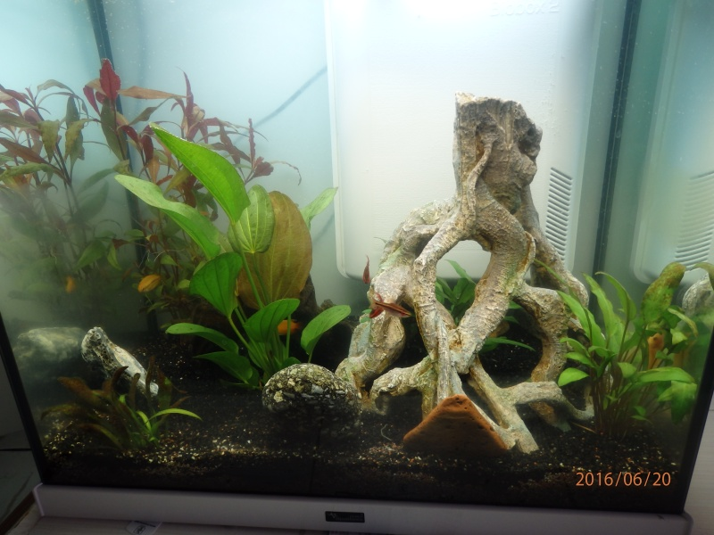 recherche nom poisson + rajout P6200115