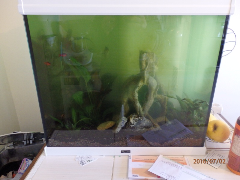 eau qui devient verte P7020110