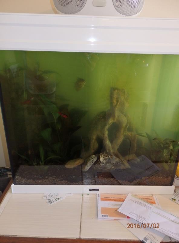eau qui devient verte P7020111