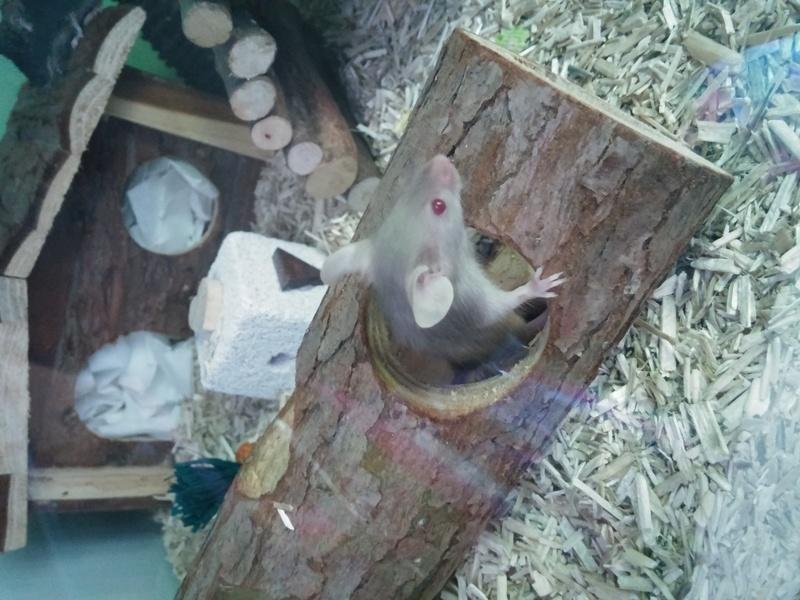 My new mice A_luna10