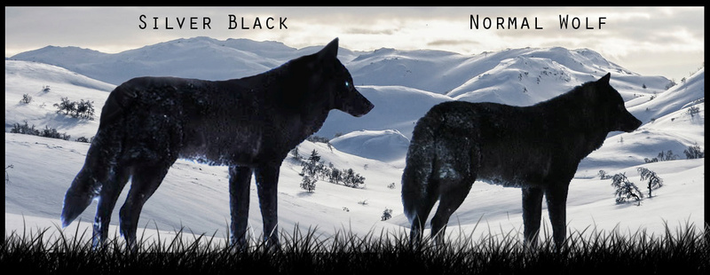 How to spot a wolf Shapeshifter ? ( UPDATED )  Untitl11