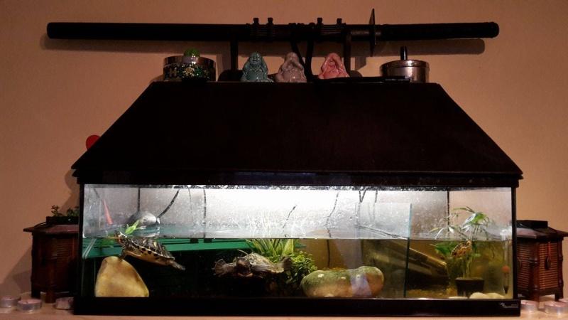 Voici des photos de mes petits aquariums :) 13499810