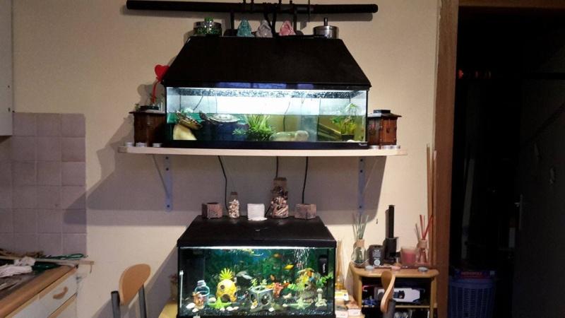 Voici des photos de mes petits aquariums :) 13524012
