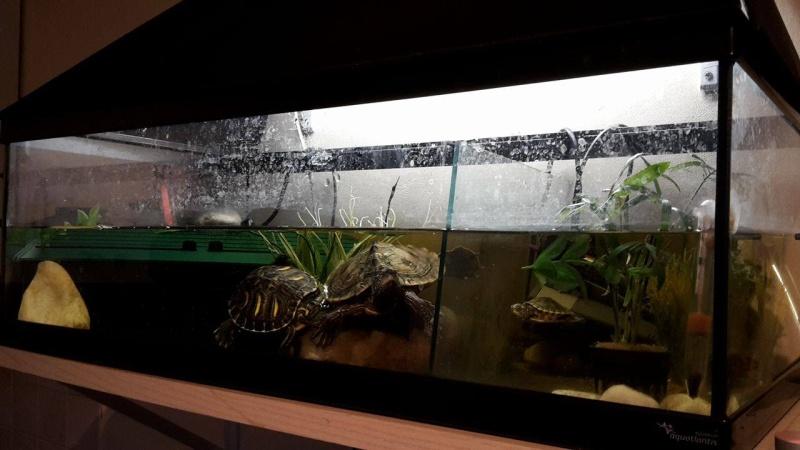 Voici des photos de mes petits aquariums :) 13548610