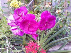 Fleurs  - Page 2 13904910