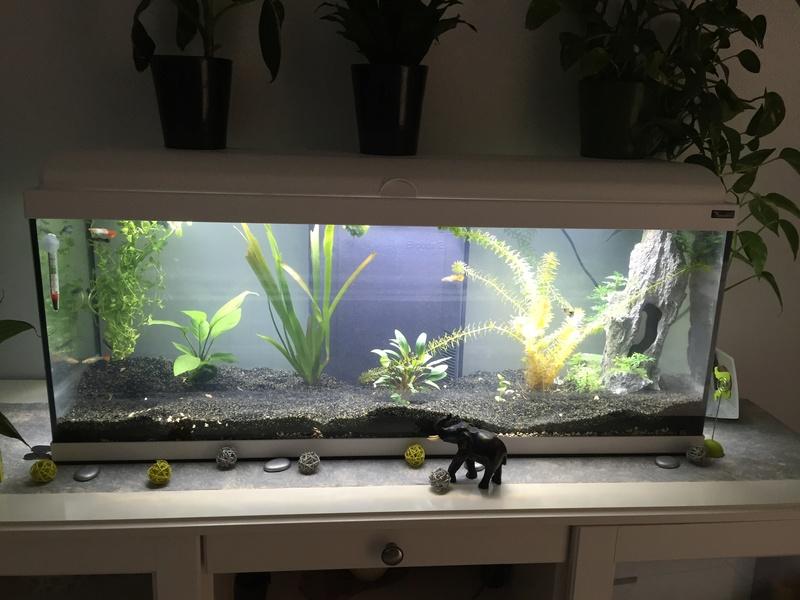 nouvel aquarium 120L Img_3810