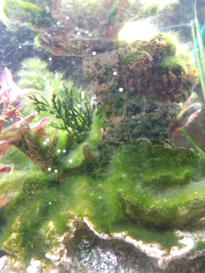 Problème d'algues  Img_2011