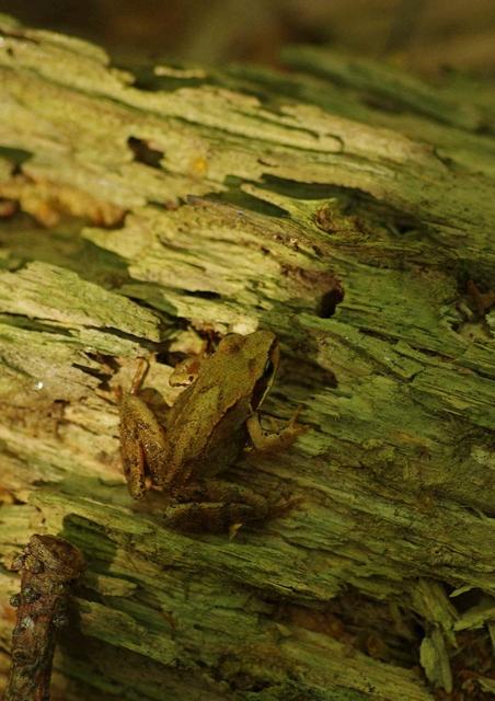 Petite grenouille Imgp8710