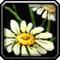 Les vertus des plantes, tome I : Apprenti Inv_mi10