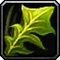 Les vertus des plantes, tome I : Apprenti Inv_mi11