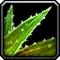 Les vertus des plantes, tome I : Apprenti Inv_mi12