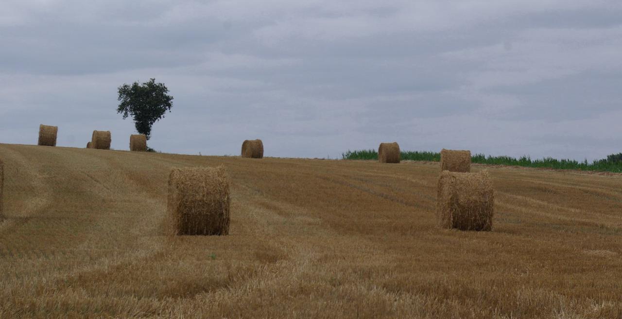 champs de blé et manoir Imgp8410