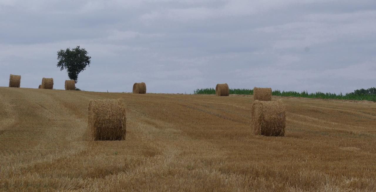 champs de blé et manoir Imgp8411