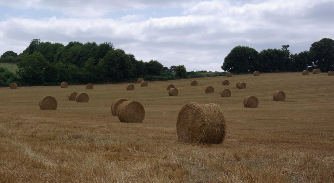 champs de blé et manoir Imgp8412