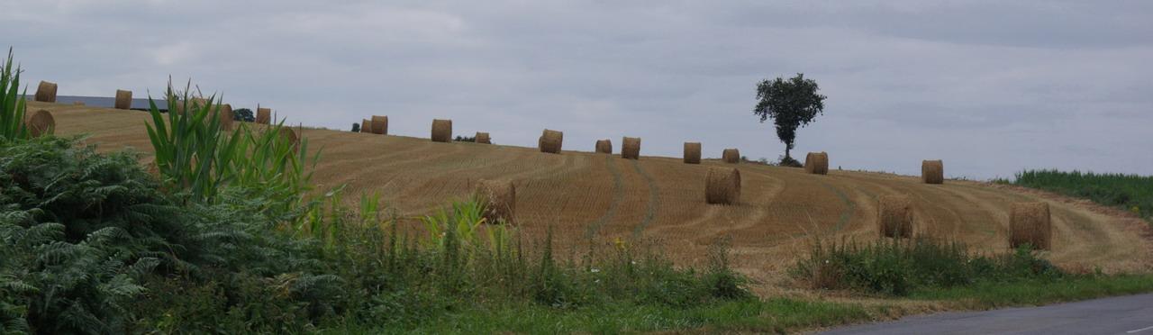 champs de blé et manoir Imgp8413