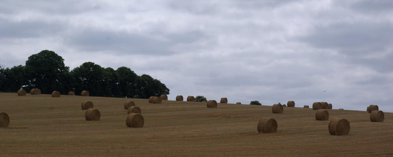 champs de blé et manoir Imgp8414