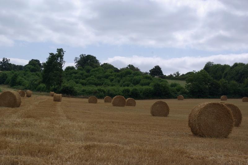 champs de blé et manoir Imgp8415