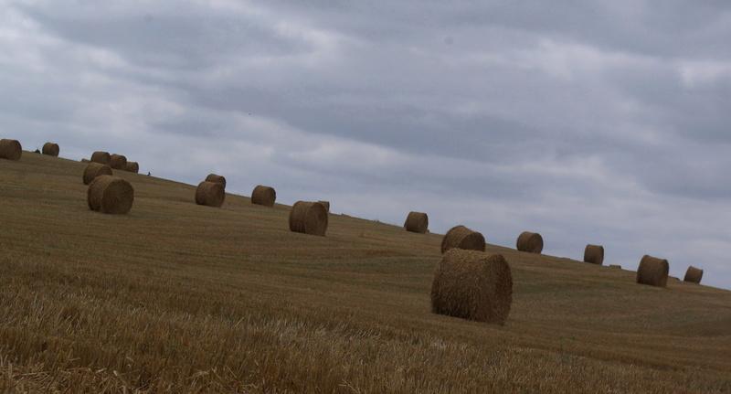 champs de blé et manoir Imgp8416