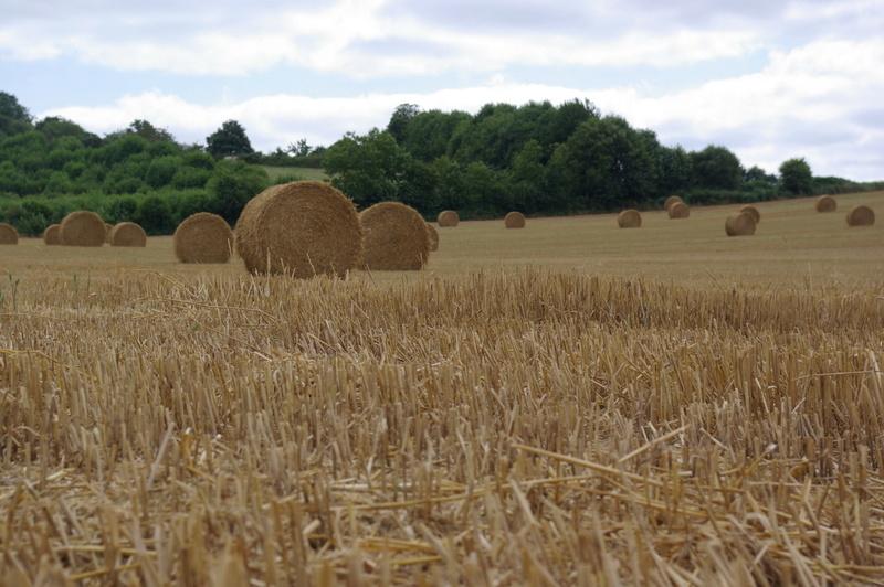 champs de blé et manoir Imgp8418