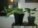 black bonsai pot  Img_0014