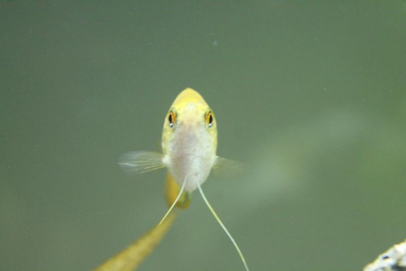 URGENT!!! poisson en danger Img_5311