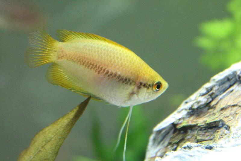 URGENT!!! poisson en danger Img_5313