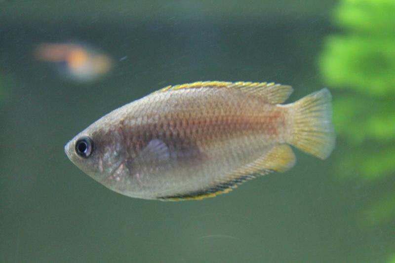 URGENT!!! poisson en danger Img_5314