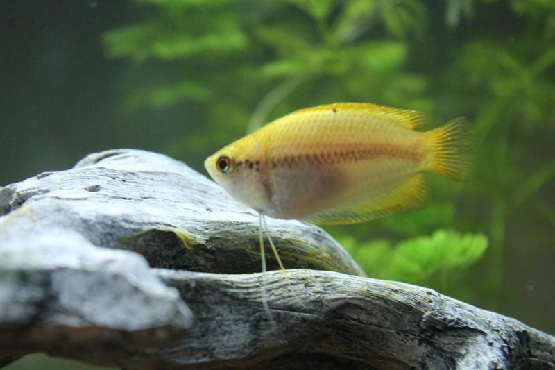 URGENT!!! poisson en danger Img_5316