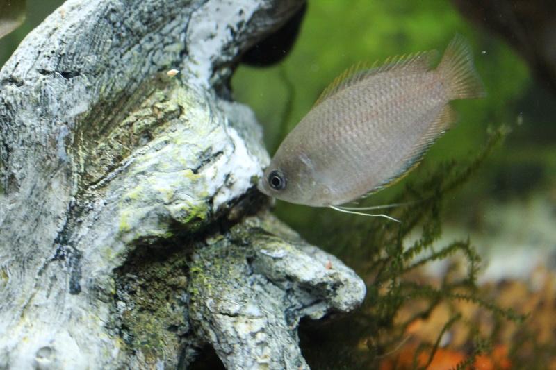 URGENT!!! poisson en danger Img_5318