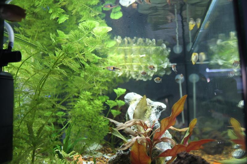 URGENT!!! poisson en danger Img_5319