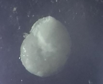 Foraminifères du Crétacé 210