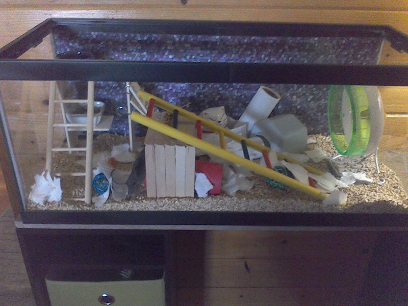 Cleaned out Mickey's tank today. Win_2065