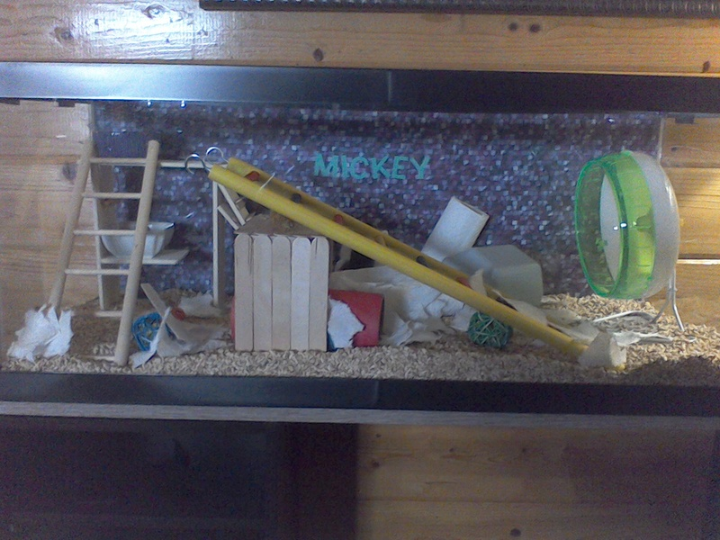 Cleaned out Mickey's tank today. Win_2070