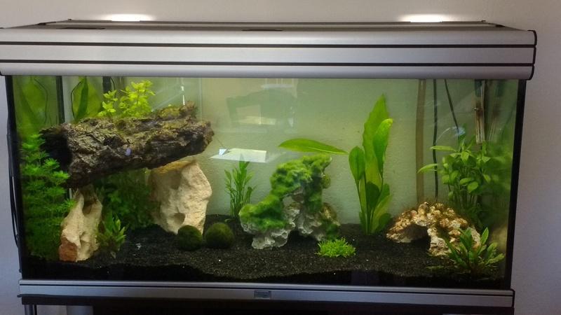 Nouvel aquarium Img_2014